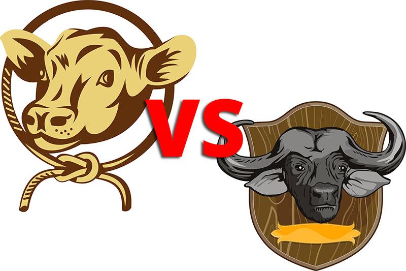 Buffalo versus Cow